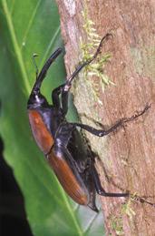 Insektenbetrachtung in 3D